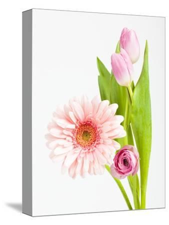 Pink Gerbera daisy, tulip and ranunculus