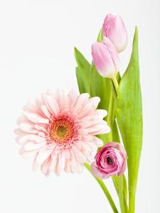 Pink Gerbera daisy, tulip and ranunculus by Frank Lukasseck