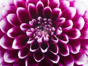 Purple Flower by Frank Lukasseck