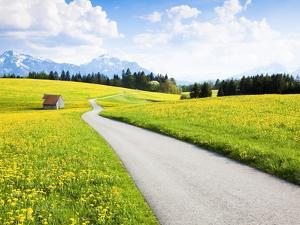 Road through dandelion fields by Frank Lukasseck