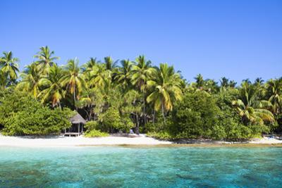 The Maldives, Sea, Palms, HŸtte (Hut) by Frank Lukasseck