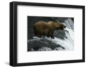 USA, Alaska, Katami National-Park, Waterfall, Grizzly Bear by Frank Lukasseck