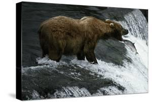 USA, Alaska, Katami National-Park, Waterfall, Grizzly Bear by Frank Lukasseck