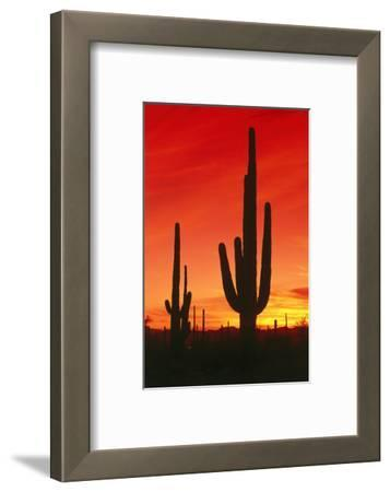 USA, Arizona, Saguaro National-Park, Landscape, Kakteen
