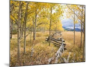 Wooden fence and Aspen forest in autumn by Frank Lukasseck