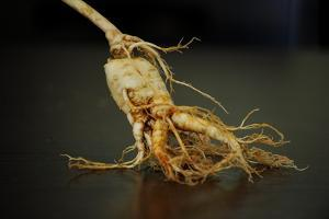 Ginseng Is Any One of Eleven Species of Slow-Growing Perennial Plants with Fleshy Roots by Frank May