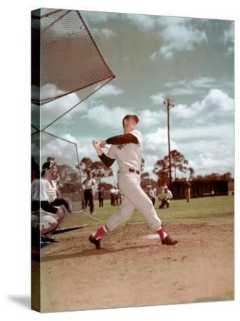 Red Sox Baseball Star Ted Williams at Bat