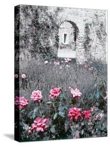 Roses in Fore in Duke of Windsor's Garden at His Summer Home in South of France by Frank Scherschel