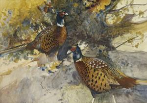 Cock Pheasants under a Beech Tree by Frank Southgate