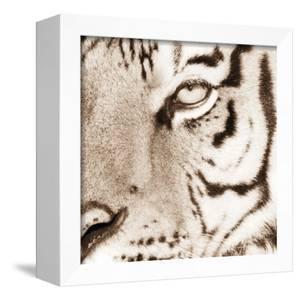 Tiger Pattern by Frank & Susann Parker