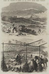 Scenes and Sketches in Caprera by Frank Vizetelly