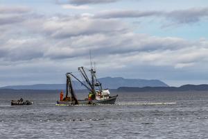 USA, Alaska, Kodiak, Chiniak Bay. Commercial fishing for salmon. by Frank Zurey