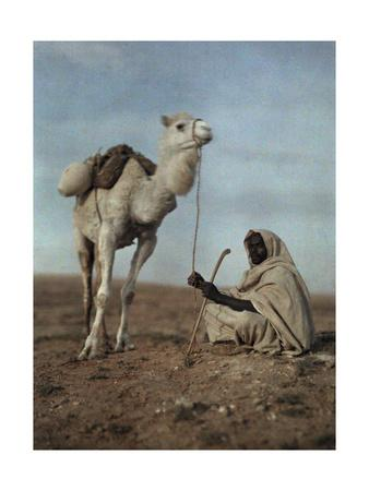 A Man Takes a Break with His White Camel