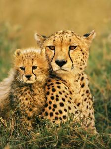 Cheetah and Cub, Masai Mara Reserve, Kenya by Frans Lanting