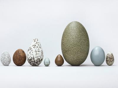 Collection of Bird Eggs, Western Foundation of Vertebrate Zoology, Los Angeles, California by Frans Lanting