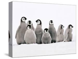 Penguins Canvas Art Prints Paintings
