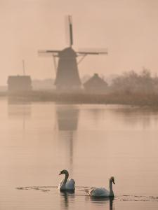 Swans and Windmill, Texel, Netherlands by Frans Lanting