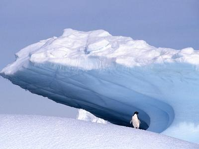Antarctica, adelie penguin in front of iceberg