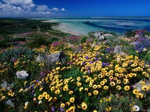 Overhead of Beach and Wildflowers by Frans Lemmens