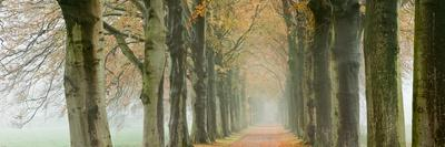 The Netherlands, 'S-Graveland, Beech Lane, Country Road, Autumn Colors