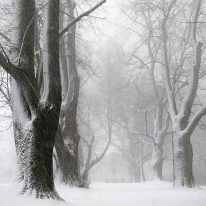 White Avenue by Franz Bogner