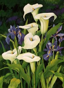 Calla Lily by Franz Heigl