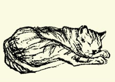 Katzen Detail 1908