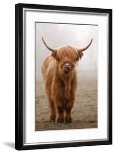 Scottish Highland Cow by Franz Peter Rudolf