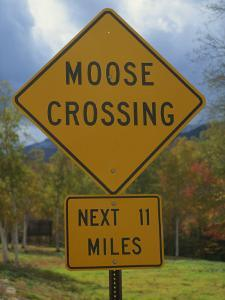 Close-Up of a Moose Crossing Yellow Road Sign, New England, United States of America, North America by Fraser Hall