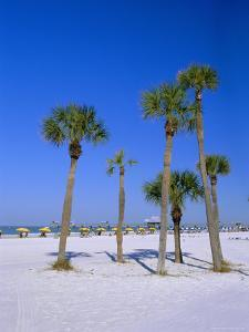 Palms and Beach, Clearwater Beach, Florida, USA by Fraser Hall