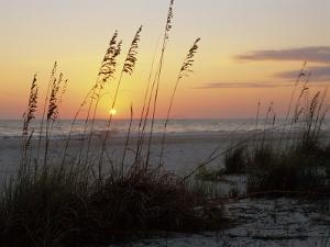 Sunset, Gulf Coast, Longboat Key, Anna Maria Island, Beach, Florida, USA by Fraser Hall