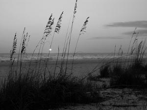Sunset, Gulf Coast, Longboat Key, Anna Maria Island, Beach, Florida, USA by Fraser Hall