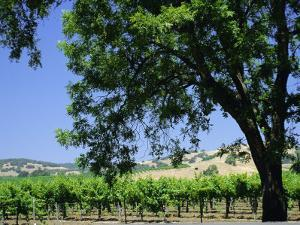 Wine Country in the Napa Valley, California, USA by Fraser Hall