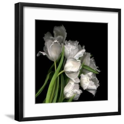 Frayed Tulips-Magda Indigo-Framed Photographic Print
