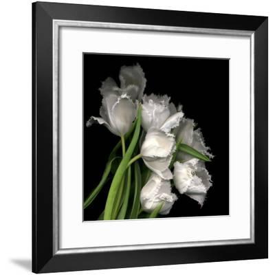 Frayed Tulips-Magda Indigo-Framed Photographic Print