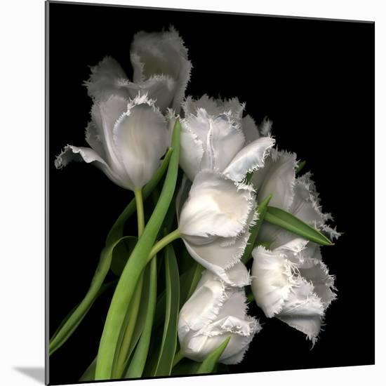 Frayed Tulips-Magda Indigo-Mounted Photographic Print
