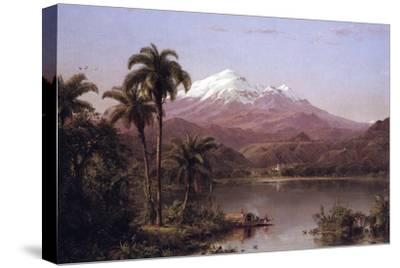 Tamaca Palms