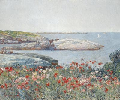 Poppies, Isles of Shoals 1891
