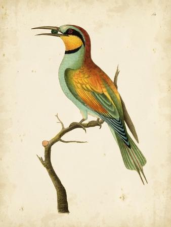 Nodder Tropical Bird I