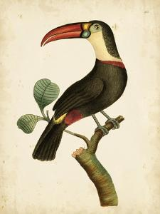 Nodder Tropical Bird III by Frederick P^ Nodder
