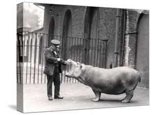 A Photograph of Ernie Bowman and Bobbie at London Zoo, 1923 by Frederick William Bond