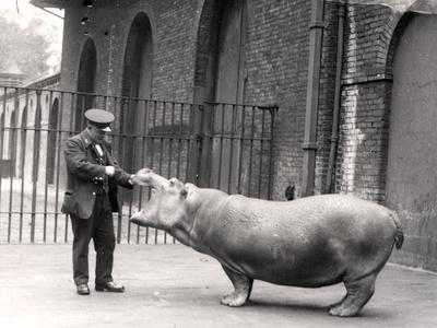 A Photograph of Ernie Bowman and Bobbie at London Zoo, 1923