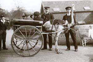 An Ostrich Cart Ride with Children and Keepers George Blore and William Dexter at London Zoo by Frederick William Bond