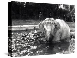 Elephant Bathing by Frederick William Bond