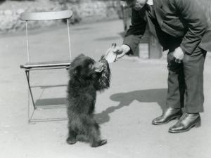 Keeper Harry Warwick Bottle Feeds a Sloth Bear Cub at London Zoo, August 1921 by Frederick William Bond