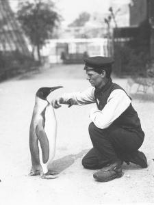 King Penguin, with Keeper Harry Munro, 1914 by Frederick William Bond
