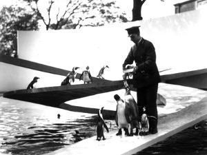 Lubetkin Penguin Pool, January 1934 by Frederick William Bond