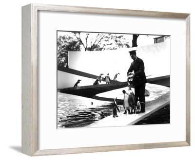 Lubetkin Penguin Pool, January 1934