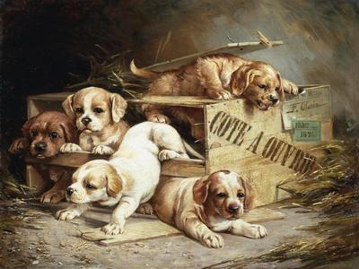Tumbling Retriever Puppies