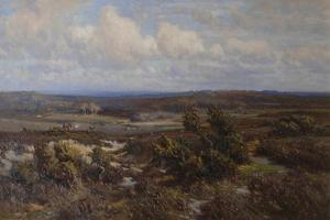 New Forest by Frederik Golden Short